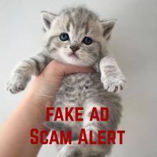 Fake ad scams